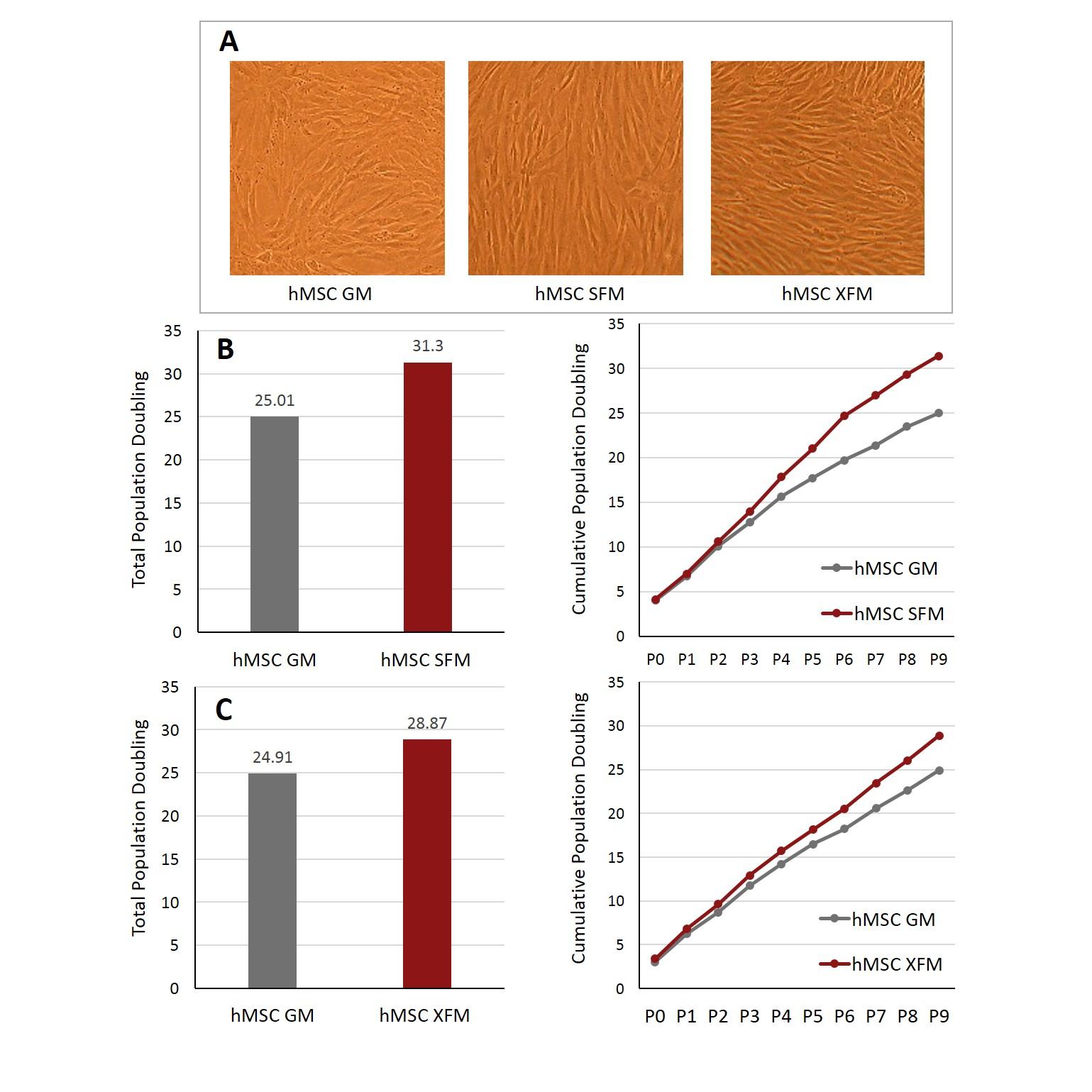 Media for Human Mesenchymal Stem Cells   Cell Applications