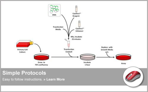 Cytofect™ Transfection Kits | Simple Protocols